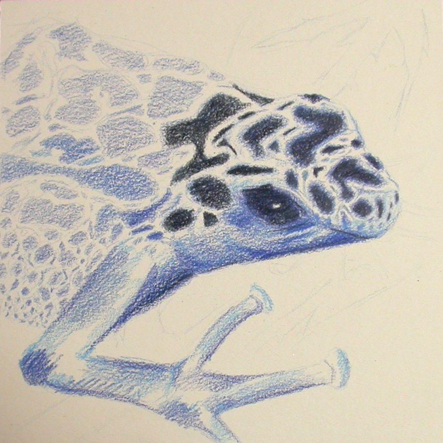Blue frog – wip2