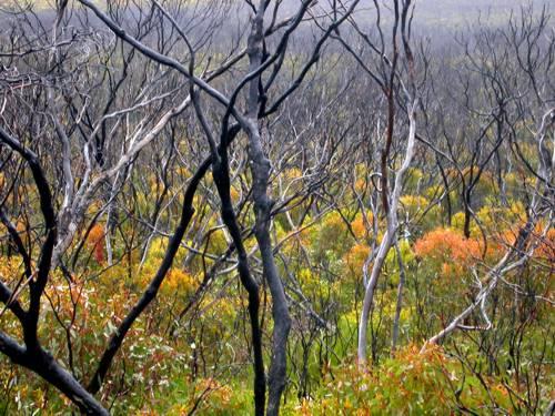 Rejuvenating forest – Port Lincoln National Park