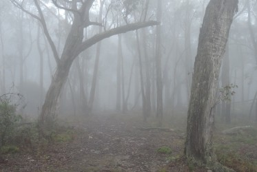 Fog in the Grampians