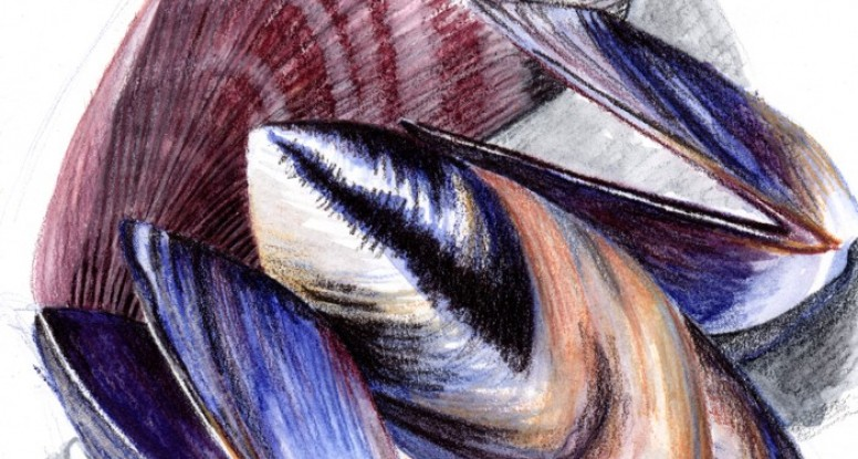 Mussels WIP