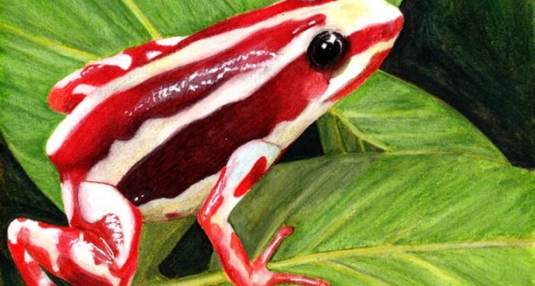 Phantasmal poison dart frog final